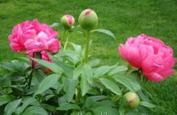 Popular Garden Folklore: Fact Or Fiction?
