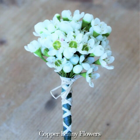 White Waxflower Boutonniere New From Copper Penny Flowers