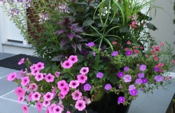 Caring For Window Boxes And Container Gardens