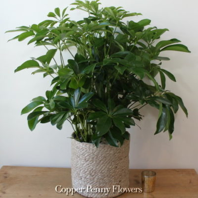 Decorative Floor Plant