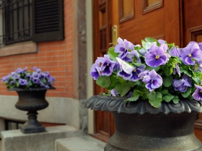 Elegant Garden Urn With Purple Pansies Framing Front Door Entrance