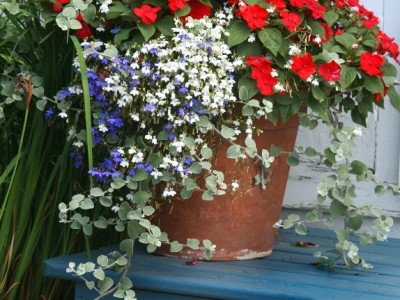 A Terracotta Garden Planter Filled With Impatiens And Lobelia.