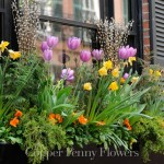 Elegant window box in Beacon Hill, Boston