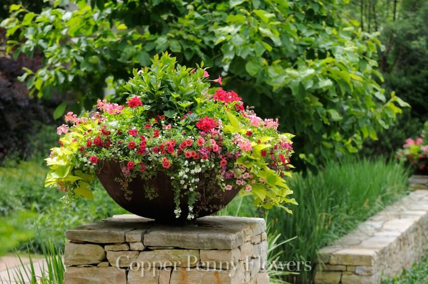 Gardening + Home - Local Concord Florist Copper Penny Flowers