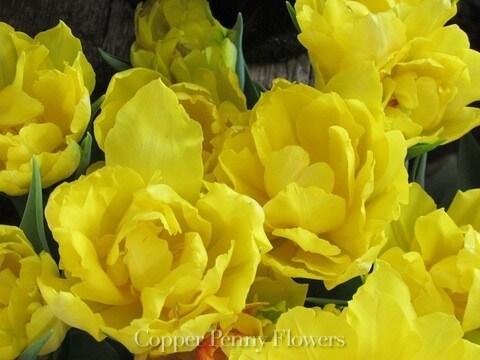Double Yellow Tullip Flowers for Boxborough customer