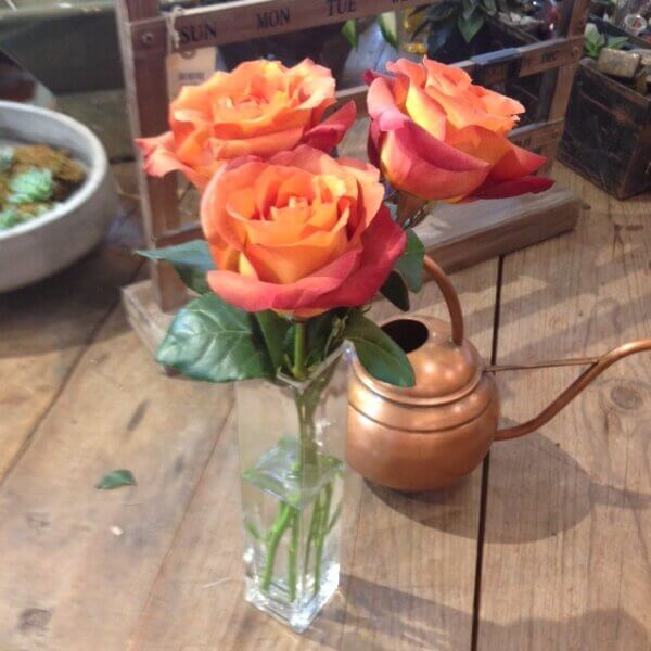 coffee break roses