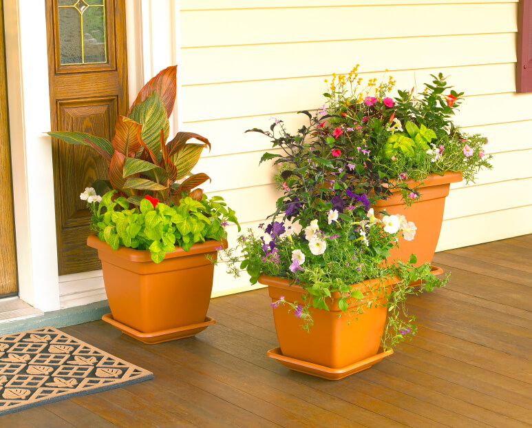 Window Box Planter Flowers Window Boxes Planters