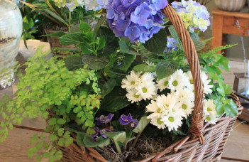 How To Care For Your Dish Garden