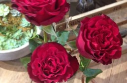 Not Your Grandmother's Roses: Heart