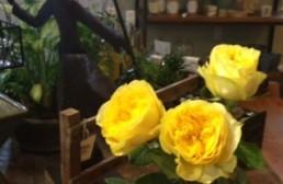 Not Your Grandmother's Roses: Lemon Pompom